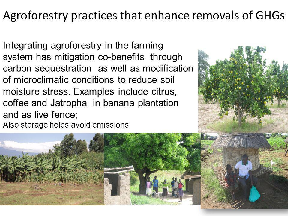 Integrating agroforestry in the farming system has mitigation co-benefits through carbon sequestration as well as modification of microclimatic conditions to reduce soil moisture stress.