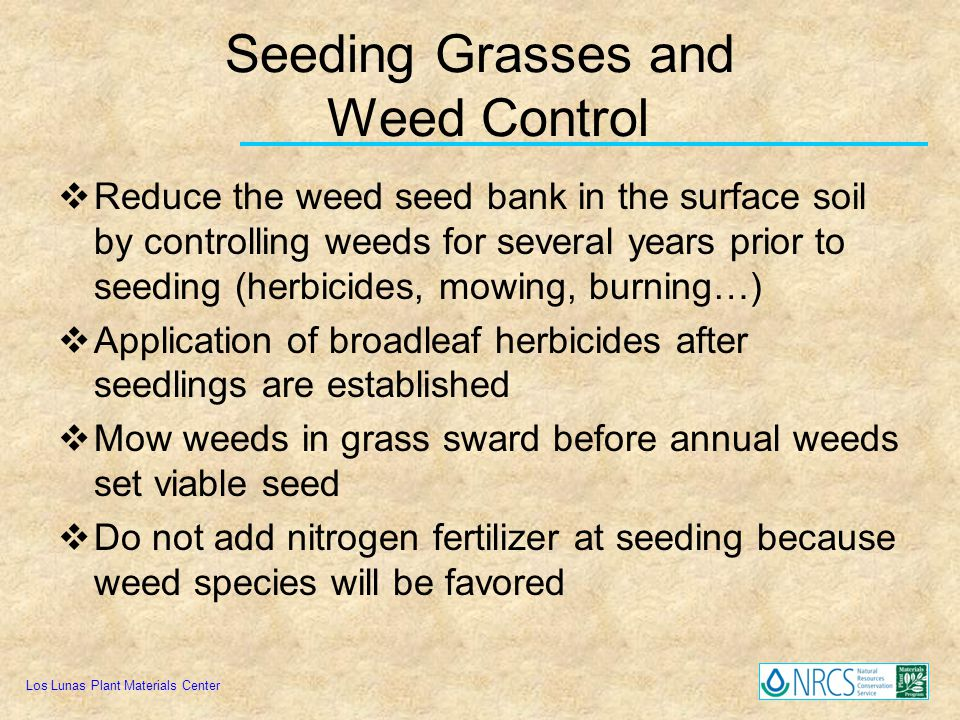 Seeding Grasses and Weed Control Reduce the weed seed bank in the surface soil by controlling weeds for several years prior to seeding (herbicides, mo