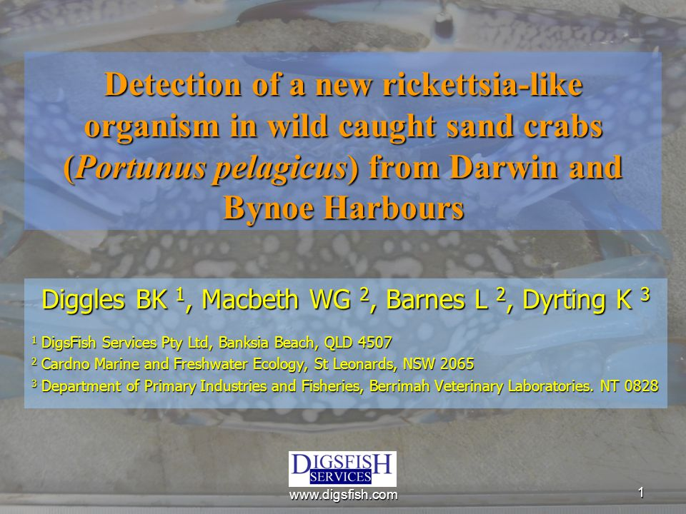 11 Detection of a new rickettsia-like organism in wild caught sand crabs (Portunus pelagicus) from Darwin and Bynoe Harbours Diggles BK 1, Macbeth WG 2, Barnes L 2, Dyrting K 3 1 DigsFish Services Pty Ltd, Banksia Beach, QLD 4507 2 Cardno Marine and Freshwater Ecology, St Leonards, NSW 2065 3 Department of Primary Industries and Fisheries, Berrimah Veterinary Laboratories.