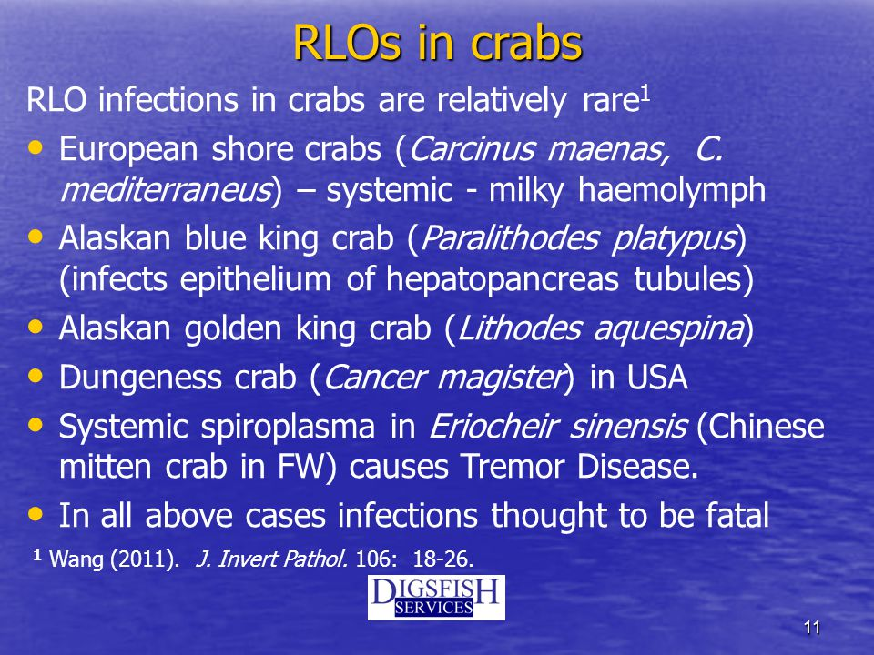 11 RLOs in crabs RLO infections in crabs are relatively rare 1 European shore crabs (Carcinus maenas, C.