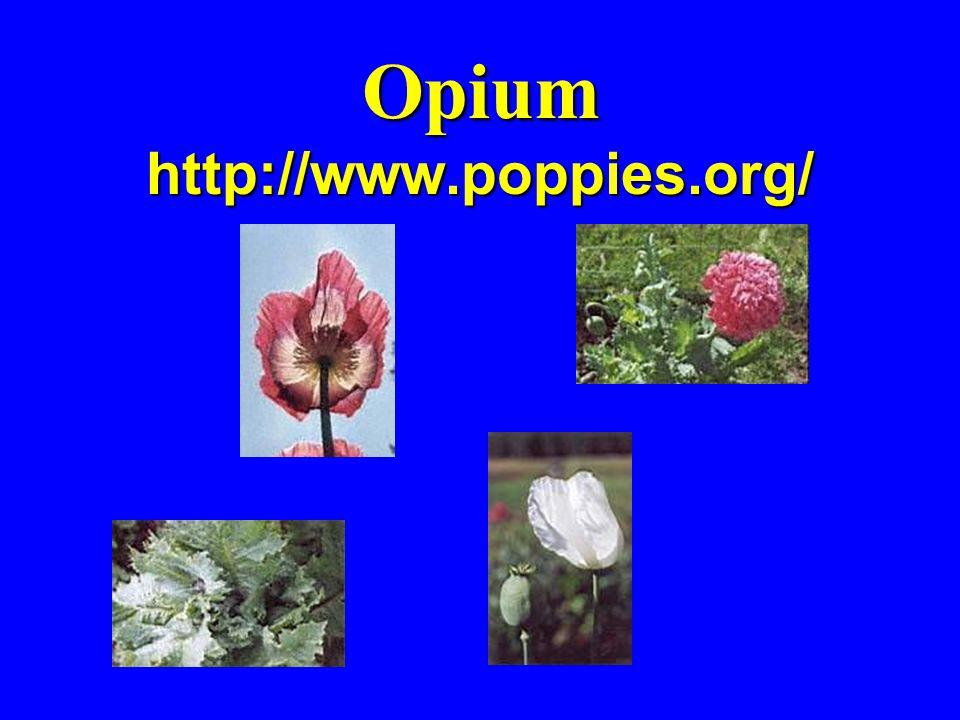 Opium http://www.poppies.org/