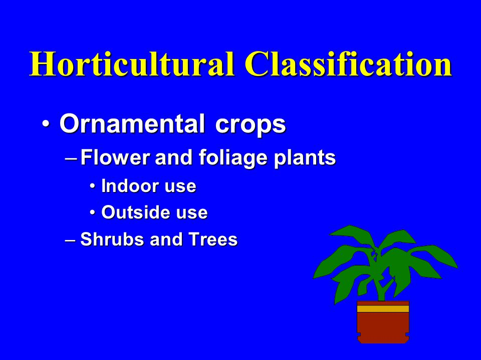 Horticultural Classification Ornamental cropsOrnamental crops –Flower and foliage plants Indoor useIndoor use Outside useOutside use –Shrubs and Trees
