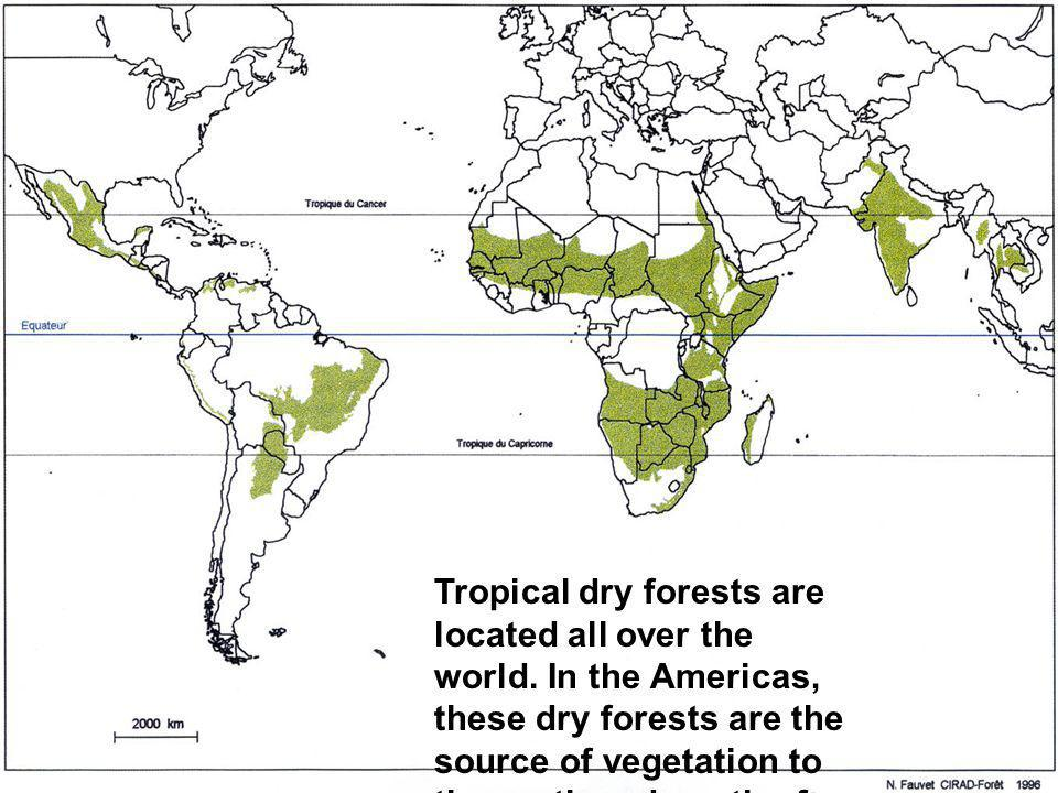 Tropical dry forests are located all over the world. In the Americas, these dry forests are the source of vegetation to the north and south of the Ama