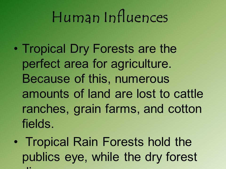 Soil in the dry forest tend to be less acidic compared to a rain forest, and richer in nutrients.