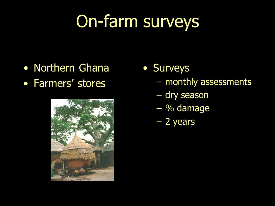 On-farm surveys Northern Ghana Farmers stores Surveys –monthly assessments –dry season –% damage –2 years