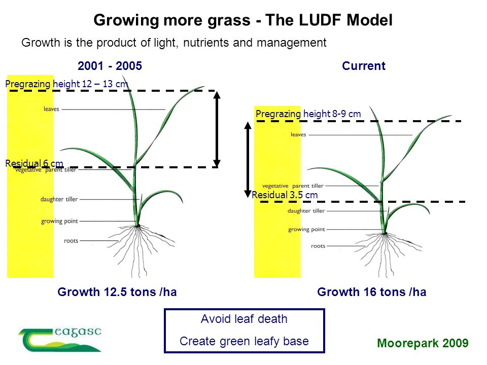 Growing more grass - The LUDF Model Growth is the product of light, nutrients and management Moorepark 2009 Residual 6 cm Pregrazing height 12 – 13 cm