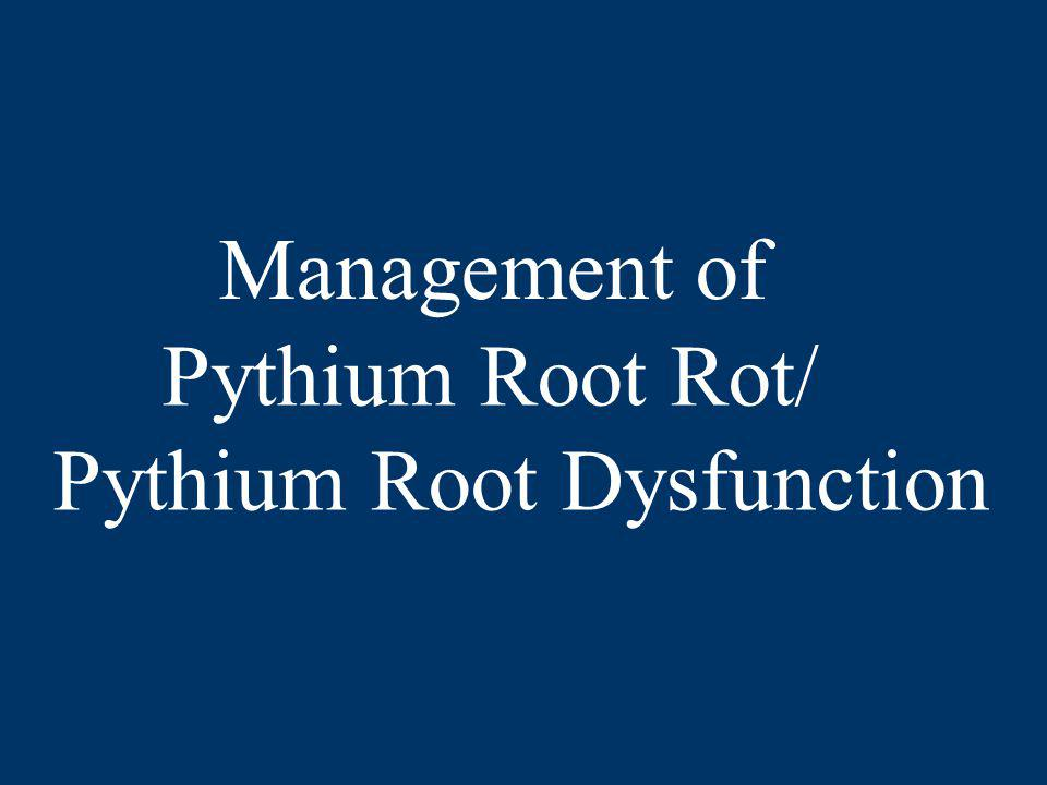 Pythium Root Rot/ Pythium Root Dysfunction Management of