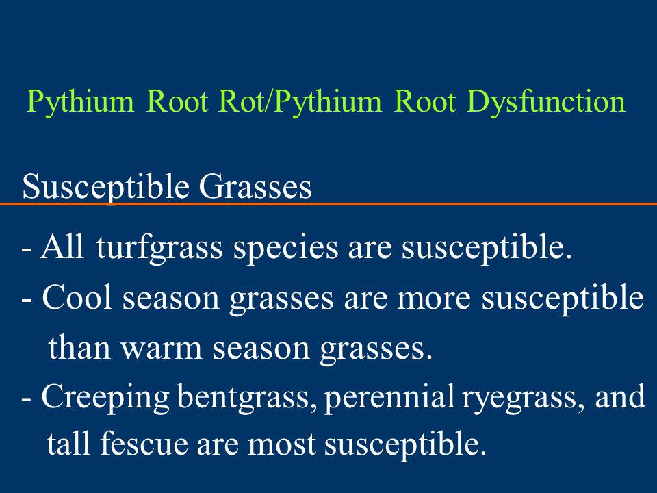 Susceptible Grasses - All turfgrass species are susceptible.