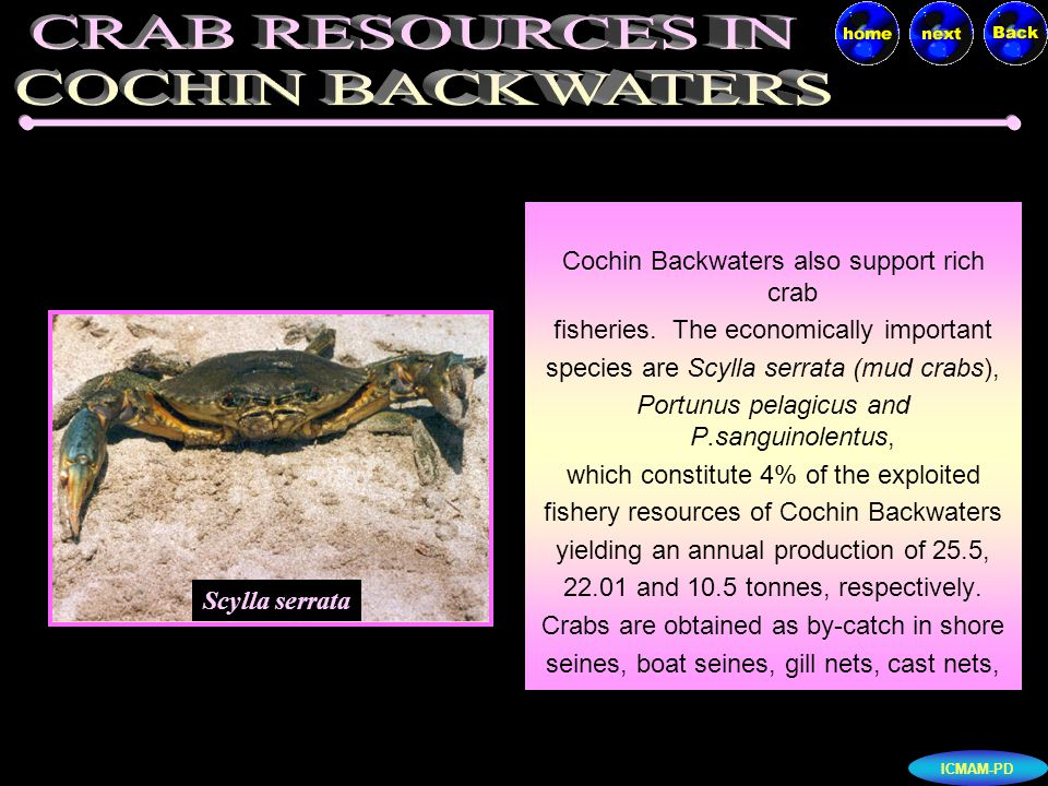 ICMAM-PD Shrimps form a major constituent of the marine fish landing in India.