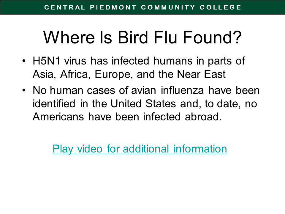 C E N T R A L P I E D M O N T C O M M U N I T Y C O L L E G E Where Is Bird Flu Found.