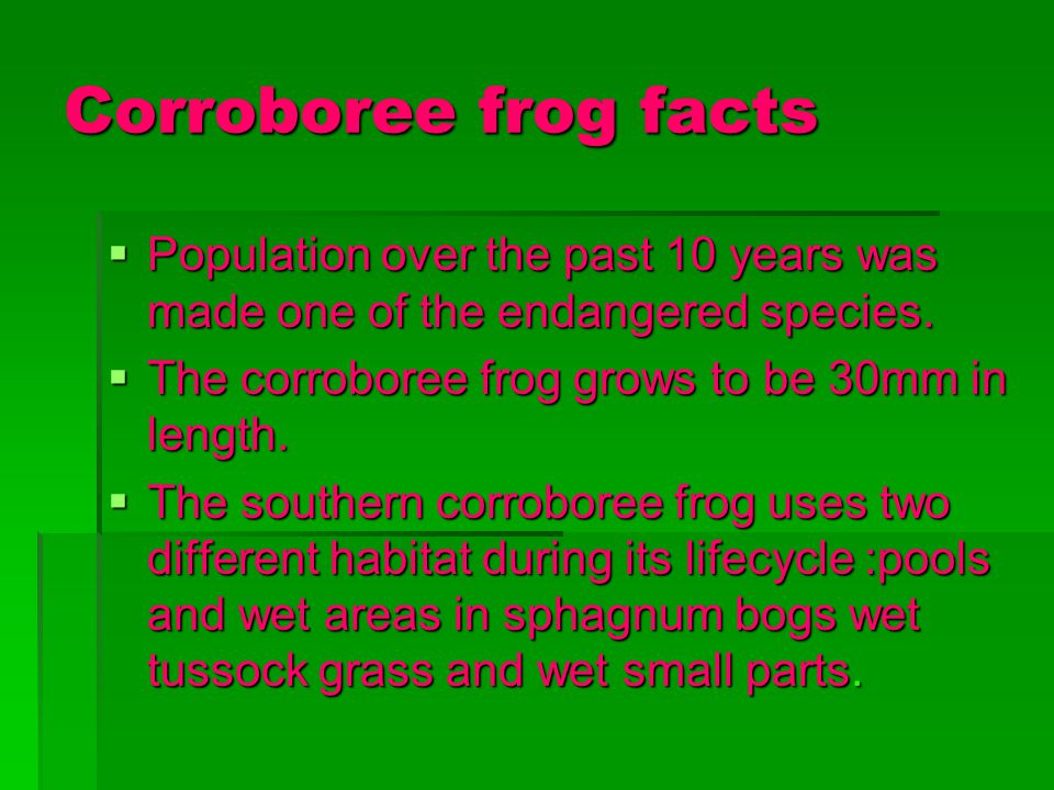 Corroboree frog facts Population over the past 10 years was made one of the endangered species. Population over the past 10 years was made one of the