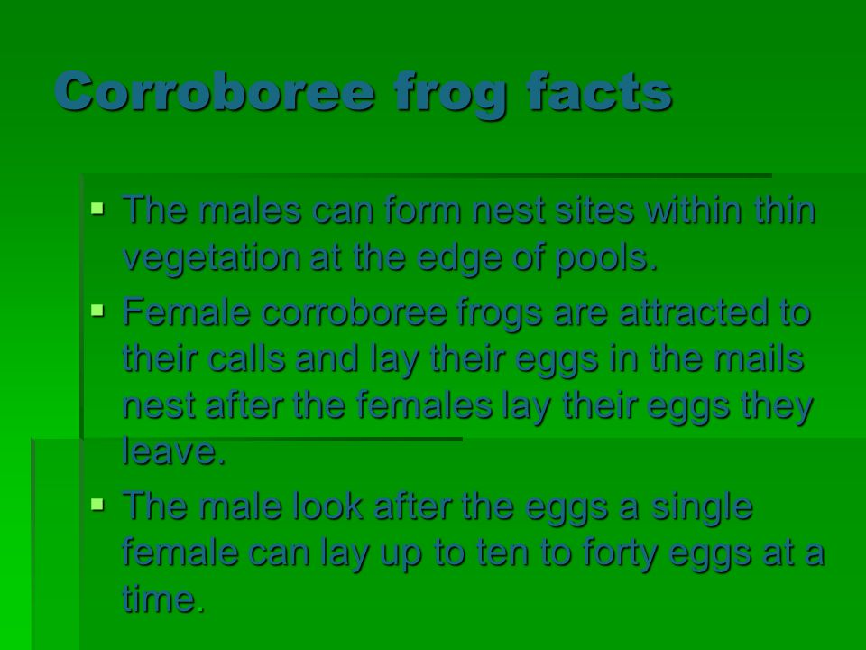 Corroboree frog facts The males can form nest sites within thin vegetation at the edge of pools. The males can form nest sites within thin vegetation