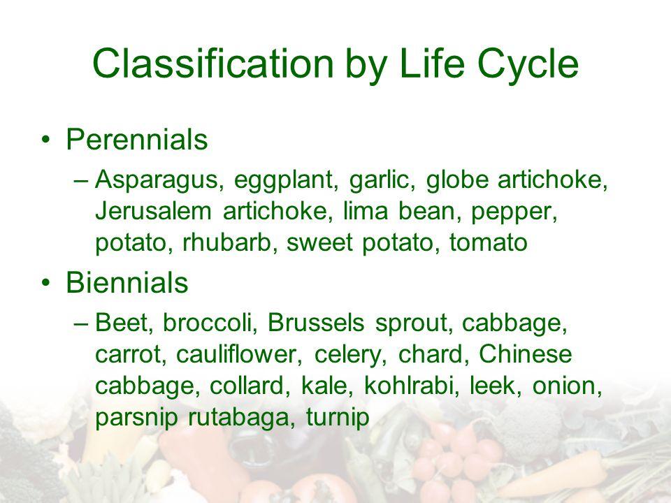 Classification by Life Cycle Perennials –Asparagus, eggplant, garlic, globe artichoke, Jerusalem artichoke, lima bean, pepper, potato, rhubarb, sweet