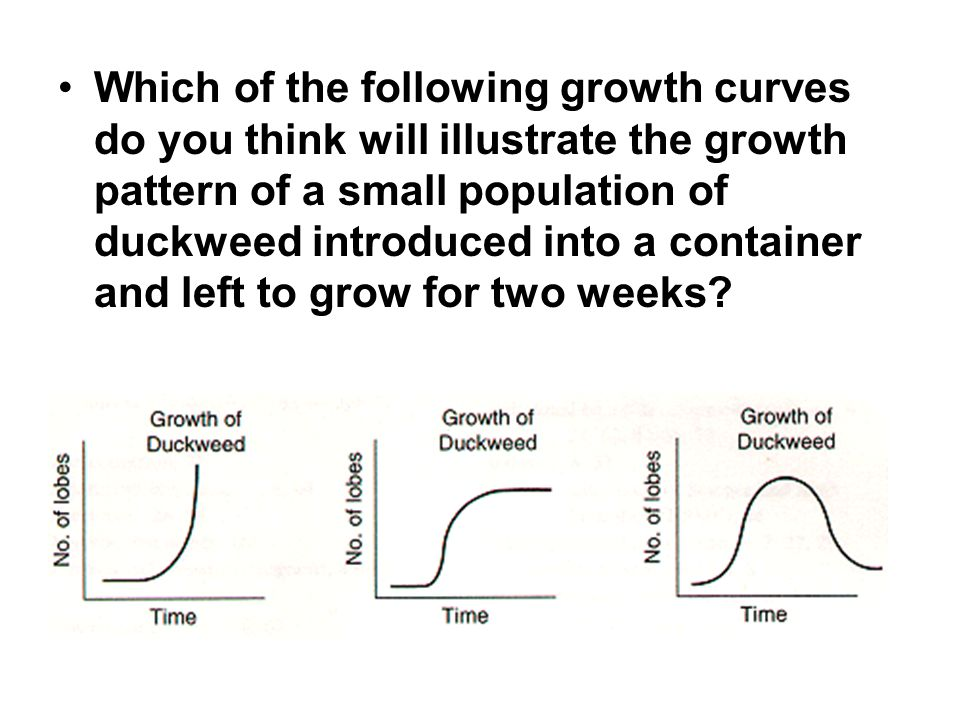 Which of the following growth curves do you think will illustrate the growth pattern of a small population of duckweed introduced into a container and left to grow for two weeks?