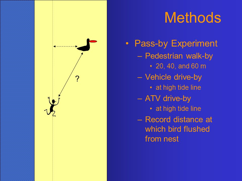 Methods Pass-by Experiment –Pedestrian walk-by 20, 40, and 60 m –Vehicle drive-by at high tide line –ATV drive-by at high tide line –Record distance at which bird flushed from nest ?