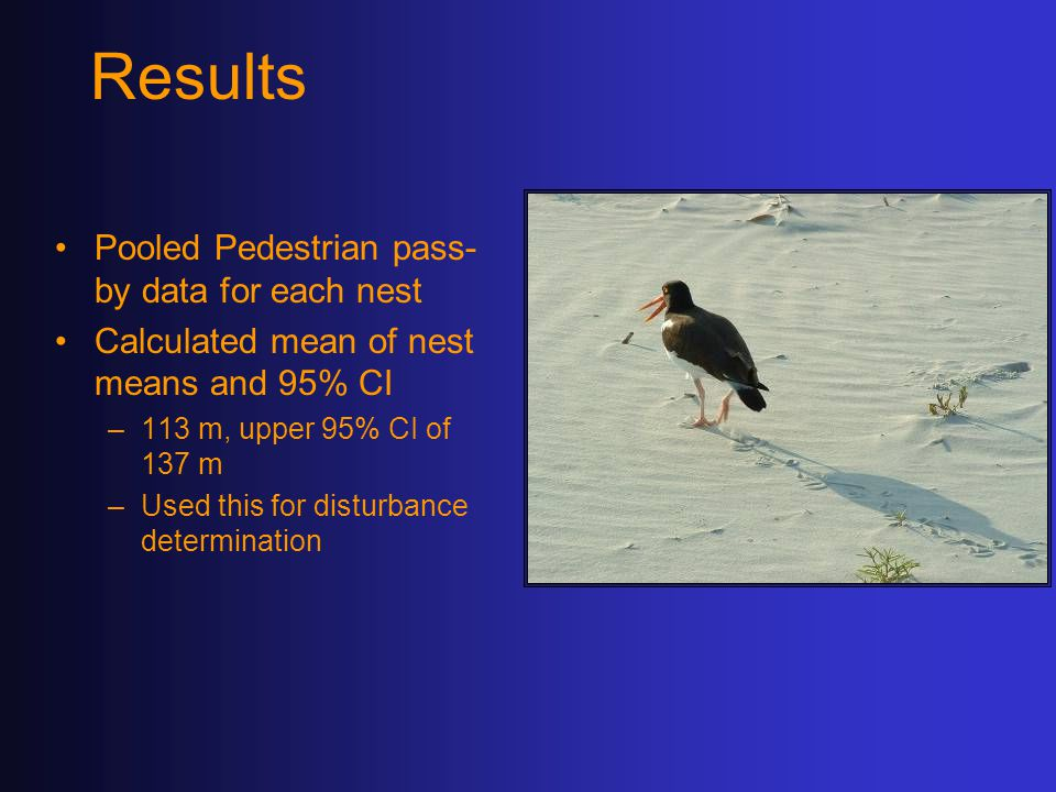 Results Pooled Pedestrian pass- by data for each nest Calculated mean of nest means and 95% CI –113 m, upper 95% CI of 137 m –Used this for disturbance determination