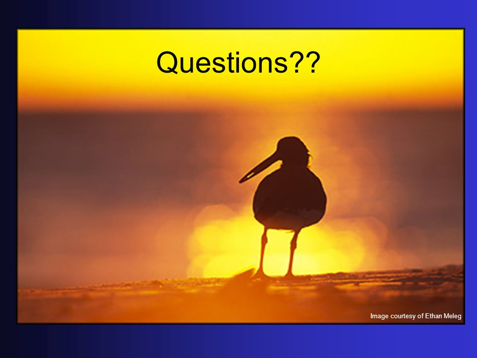 Questions?? Image courtesy of Ethan Meleg