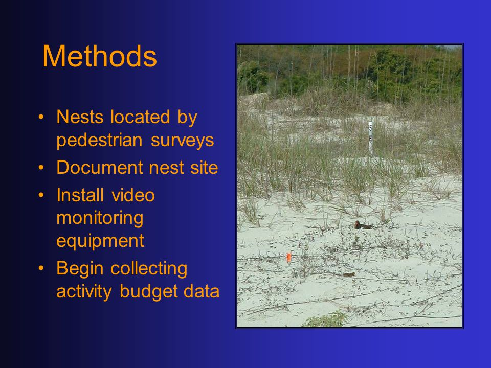Methods Nests located by pedestrian surveys Document nest site Install video monitoring equipment Begin collecting activity budget data