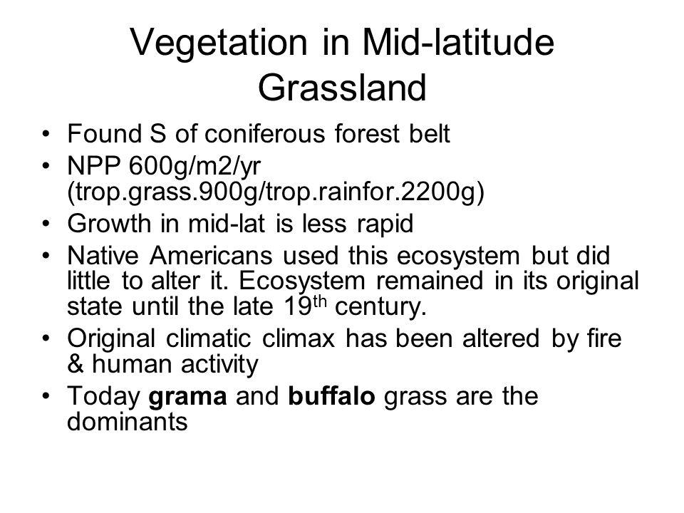 Vegetation in Mid-latitude Grassland Found S of coniferous forest belt NPP 600g/m2/yr (trop.grass.900g/trop.rainfor.2200g) Growth in mid-lat is less rapid Native Americans used this ecosystem but did little to alter it.