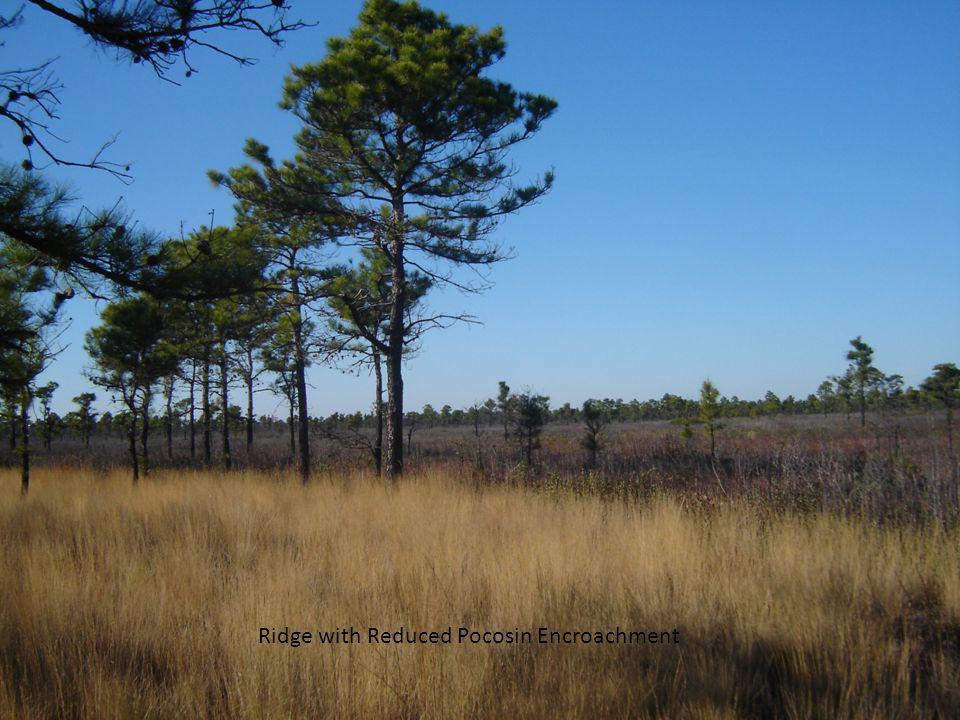 Ridge with Reduced Pocosin Encroachment
