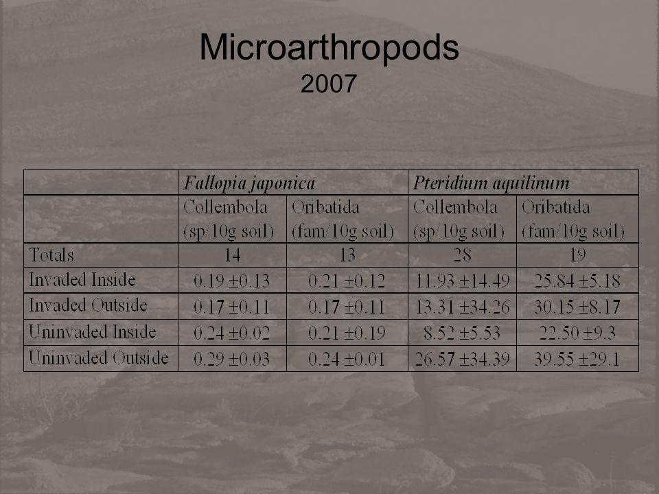Microarthropods 2007