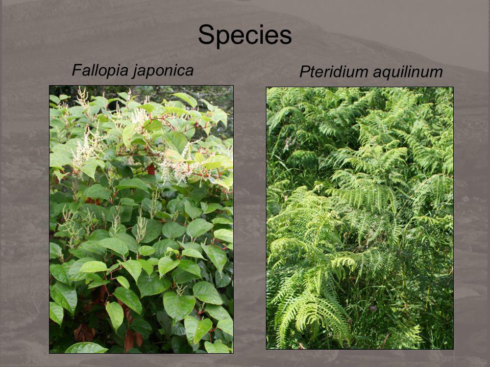 Species Fallopia japonica Pteridium aquilinum