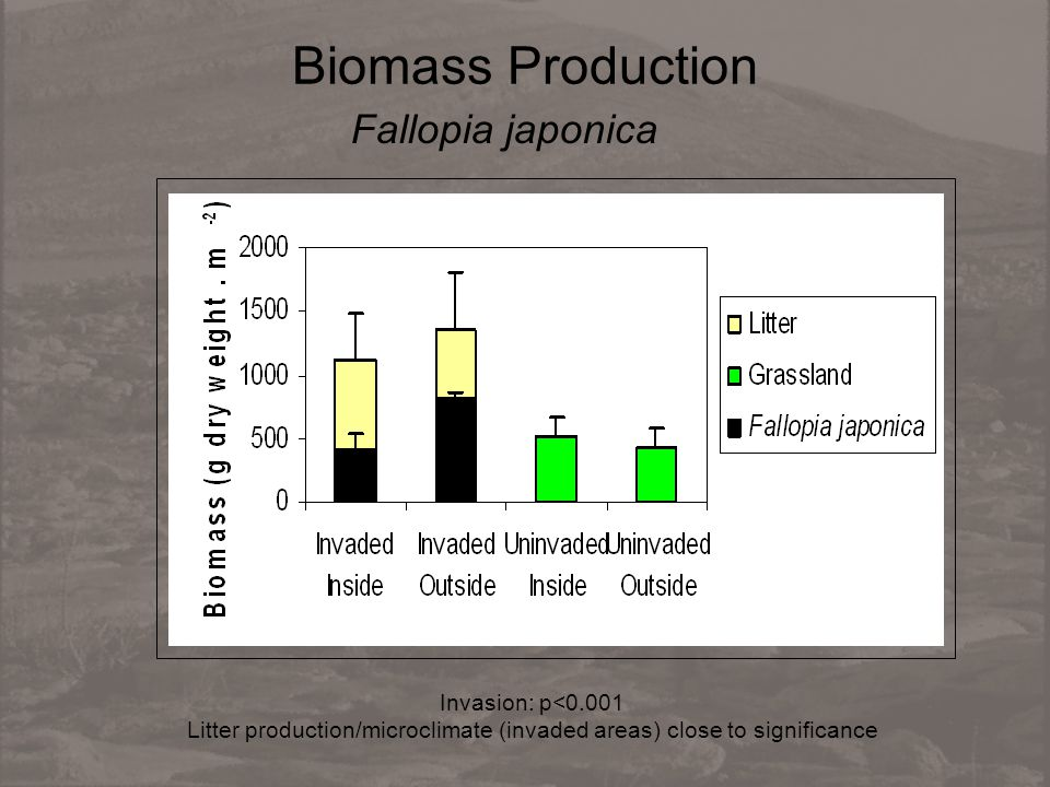 Biomass Production Fallopia japonica Invasion: p<0.001 Litter production/microclimate (invaded areas) close to significance