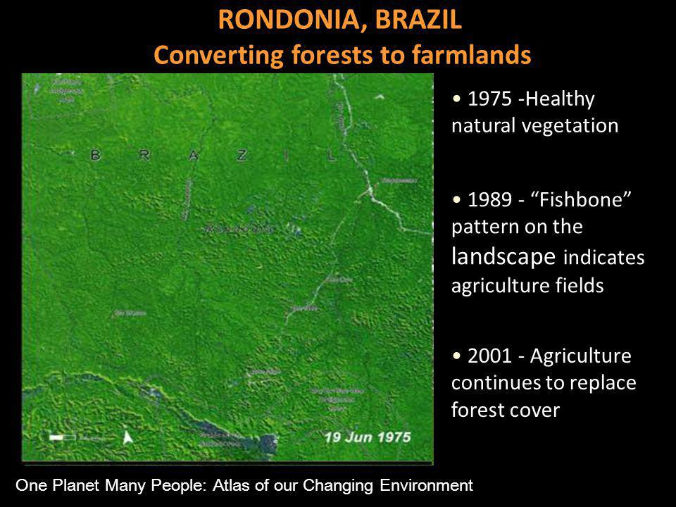1975 -Healthy natural vegetation Fishbone pattern on the landscape indicates agriculture fields Agriculture continues to replace forest cover RONDONIA, BRAZIL Converting forests to farmlands One Planet Many People: Atlas of our Changing Environment
