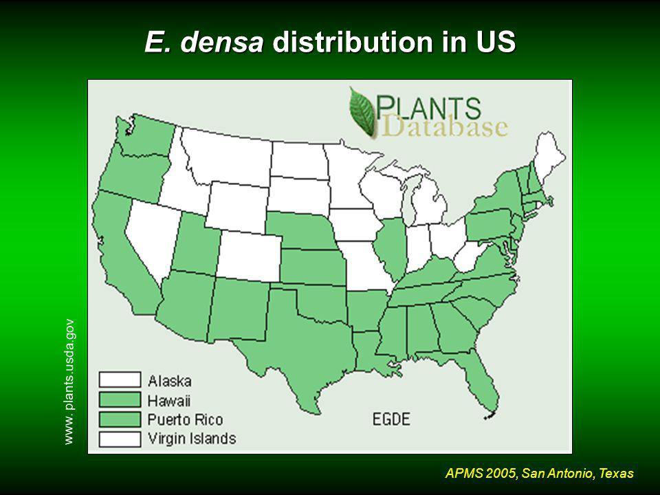 APMS 2005, San Antonio, Texas E. densa distribution in US www. plants.usda.gov