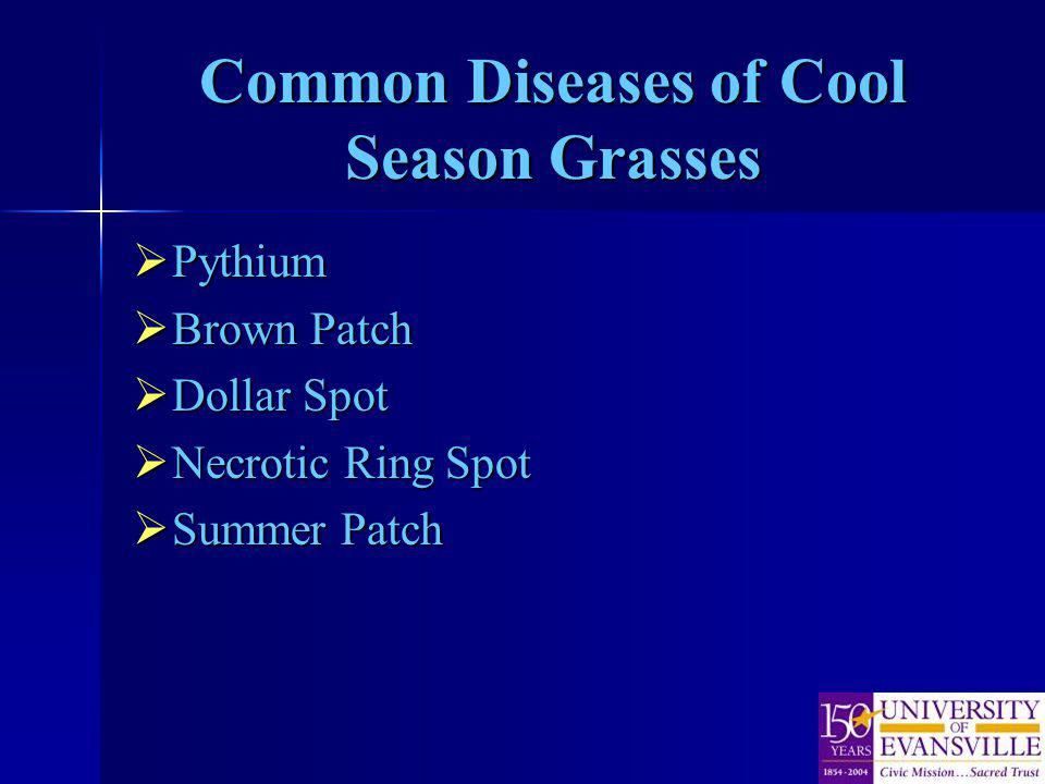 Common Diseases of Cool Season Grasses Pythium Pythium Brown Patch Brown Patch Dollar Spot Dollar Spot Necrotic Ring Spot Necrotic Ring Spot Summer Patch Summer Patch