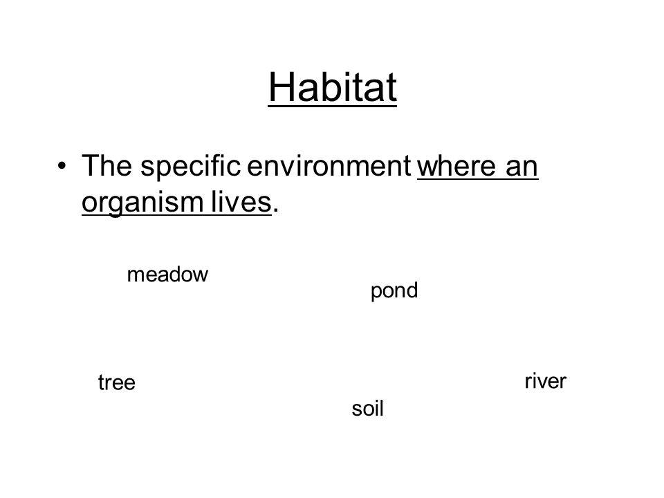 Habitat The specific environment where an organism lives. tree pond soil meadow river