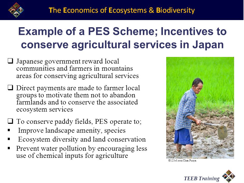 TEEB Training Example of a PES Scheme; Incentives to conserve agricultural services in Japan Japanese government reward local communities and farmers in mountains areas for conserving agricultural services Direct payments are made to farmer local groups to motivate them not to abandon farmlands and to conserve the associated ecosystem services To conserve paddy fields, PES operate to; Improve landscape amenity, species Ecosystem diversity and land conservation Prevent water pollution by encouraging less use of chemical inputs for agriculture ©123rf.com/Chan Punya