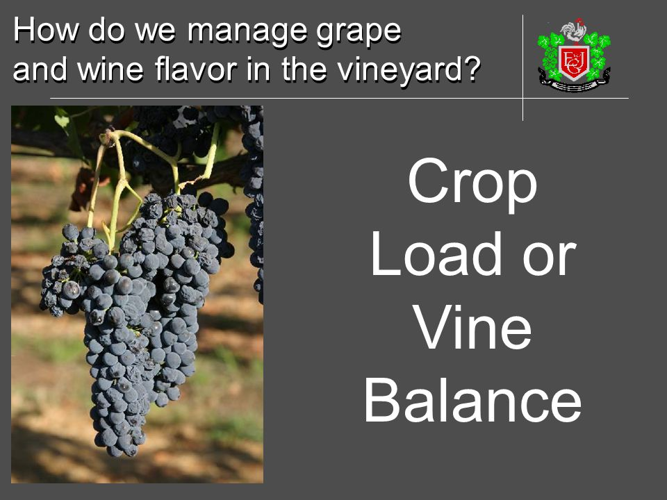 How do we manage grape and wine flavor in the vineyard? How do we manage grape and wine flavor in the vineyard? Crop Load or Vine Balance