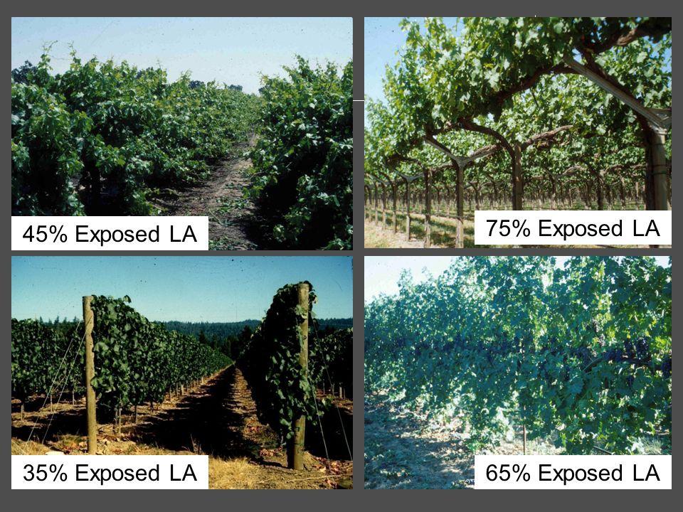 45% Exposed LA 35% Exposed LA 75% Exposed LA 65% Exposed LA