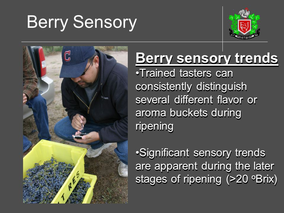 Berry sensory trends Trained tasters can consistently distinguish several different flavor or aroma buckets during ripening Significant sensory trends