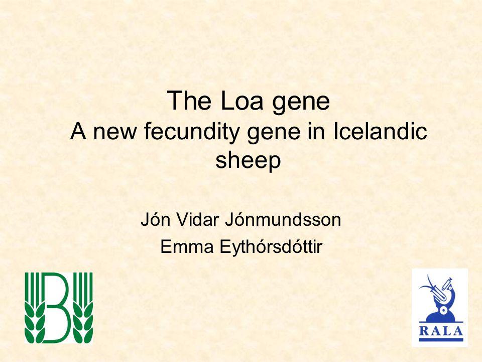 The Loa gene A new fecundity gene in Icelandic sheep Jón Vidar Jónmundsson Emma Eythórsdóttir
