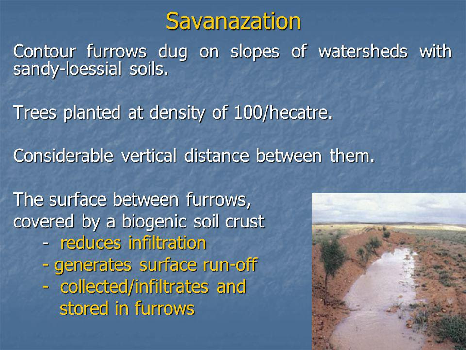Savanazation Contour furrows dug on slopes of watersheds with sandy-loessial soils.