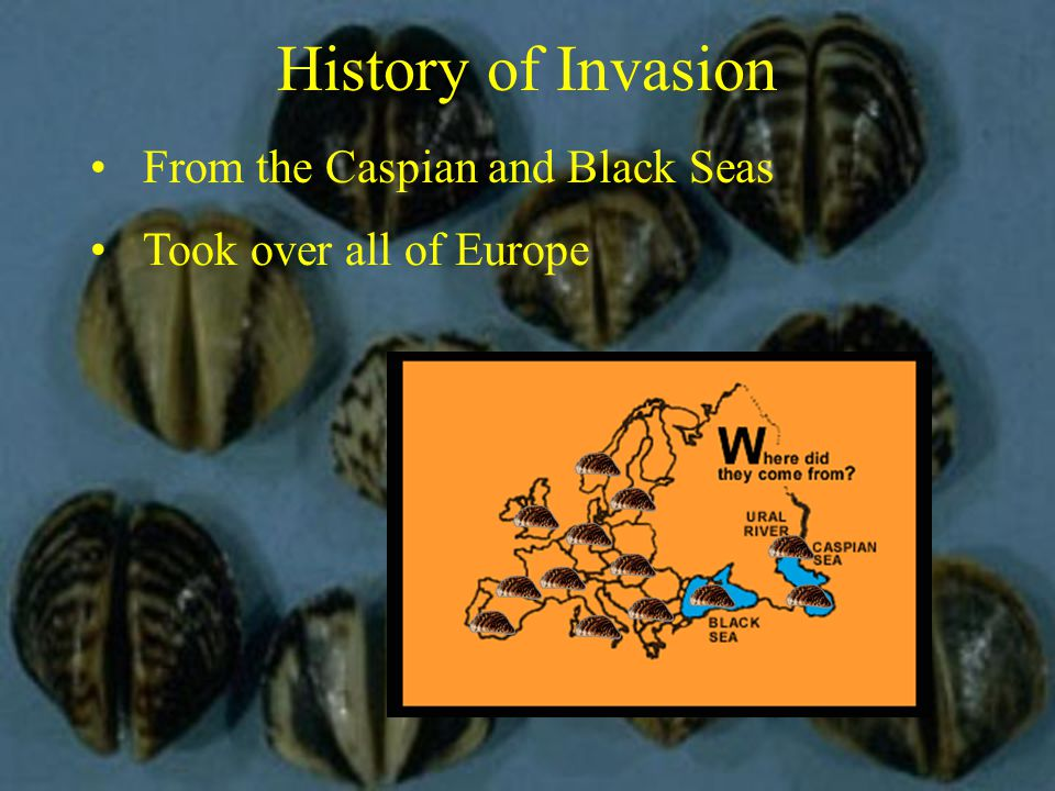 History of Invasion From the Caspian and Black Seas Took over all of Europe