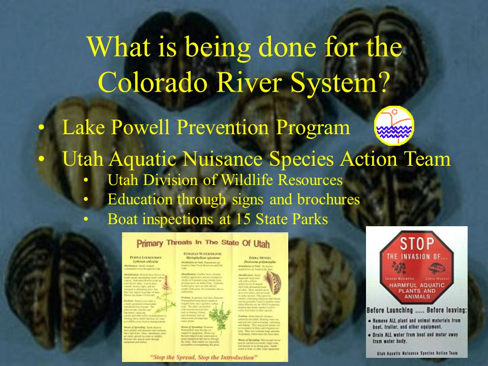 What is being done for the Colorado River System.