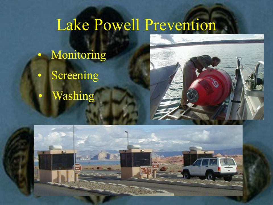 Lake Powell Prevention Monitoring Screening Washing