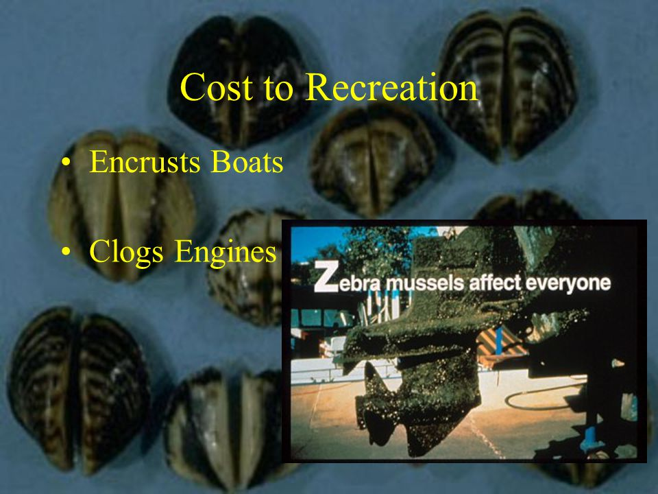 Cost to Recreation Encrusts Boats Clogs Engines