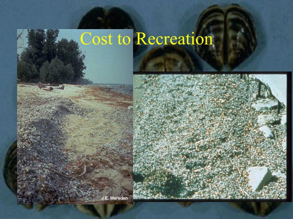 Lake Powell Prevention Monitoring Screening Washing