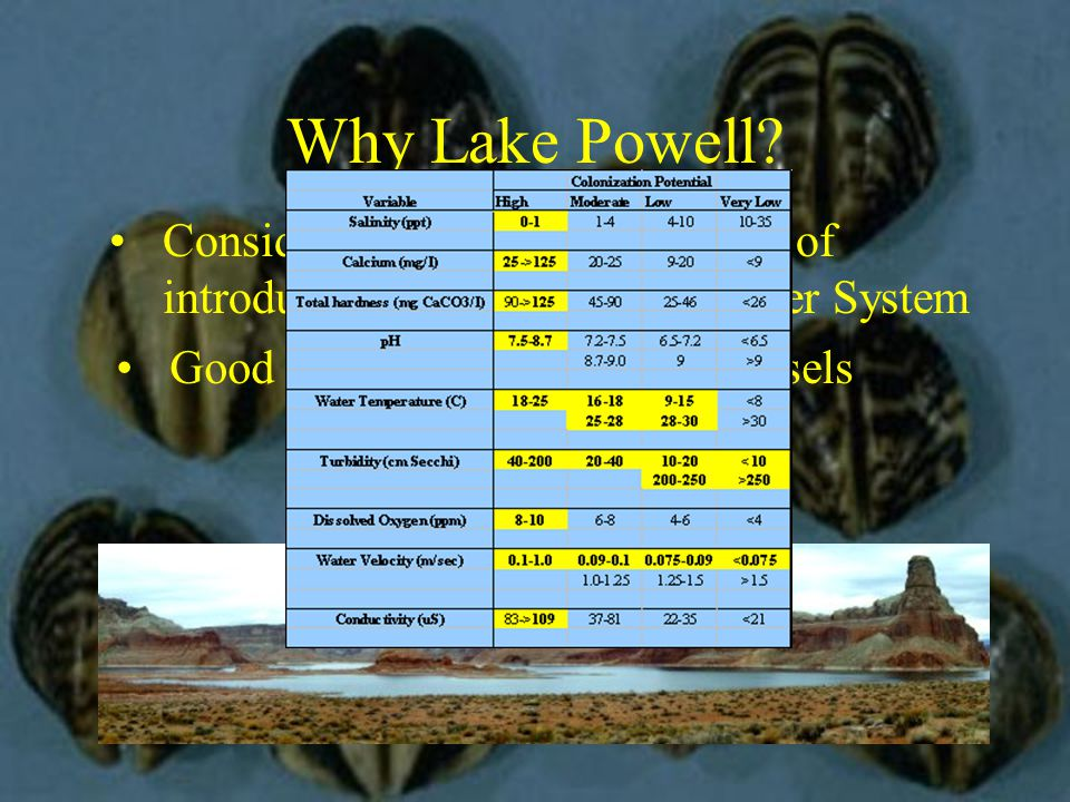 Why Lake Powell.