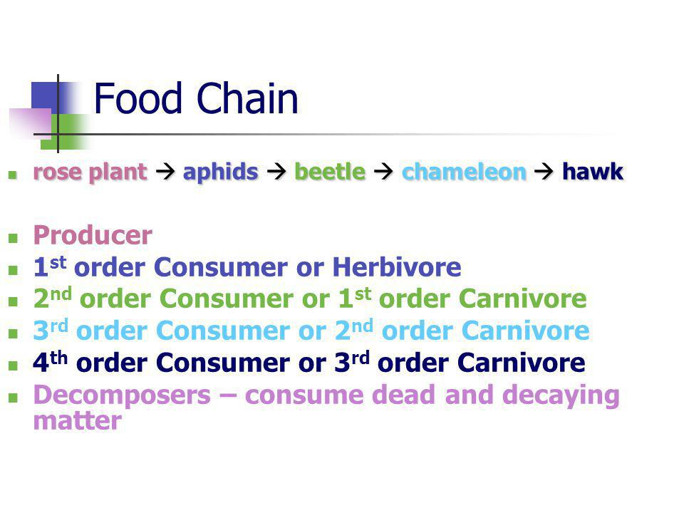 Food Chain rose plant aphids beetle chameleon hawk rose plant aphids beetle chameleon hawk Producer 1 st order Consumer or Herbivore 2 nd order Consumer or 1 st order Carnivore 3 rd order Consumer or 2 nd order Carnivore 4 th order Consumer or 3 rd order Carnivore Decomposers – consume dead and decaying matter