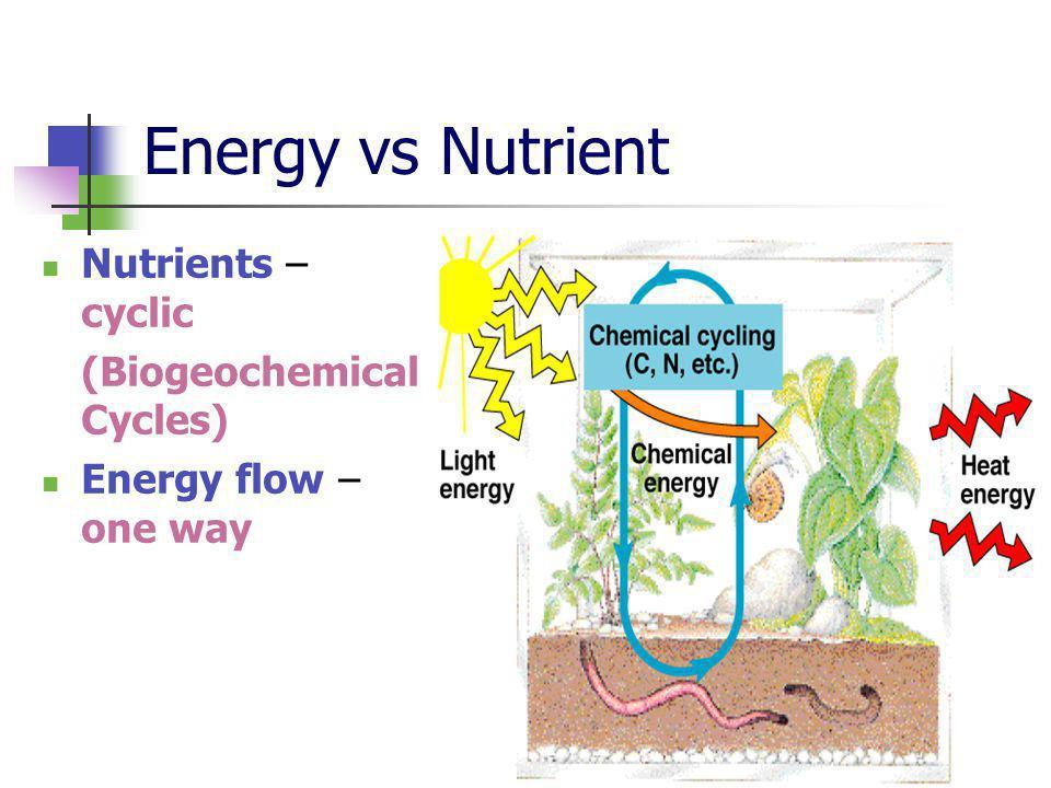 Energy vs Nutrient Nutrients – cyclic (Biogeochemical Cycles) Energy flow – one way
