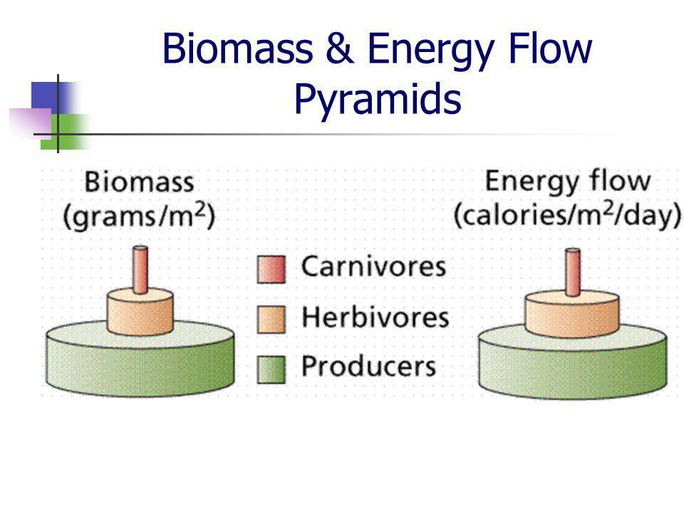 Biomass & Energy Flow Pyramids
