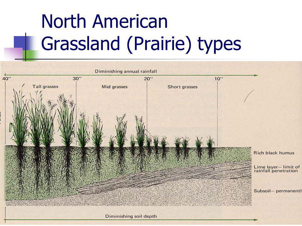 North American Grassland (Prairie) types