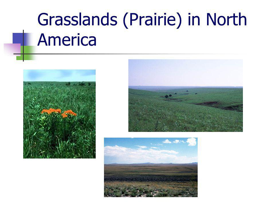 Grasslands (Prairie) in North America