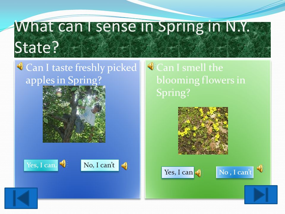 What can I sense in Winter in N.Y.? Click on the correct answers. Can I taste freshly picked apples in winter? Yes, I can No, I cant Yes, I can No, I