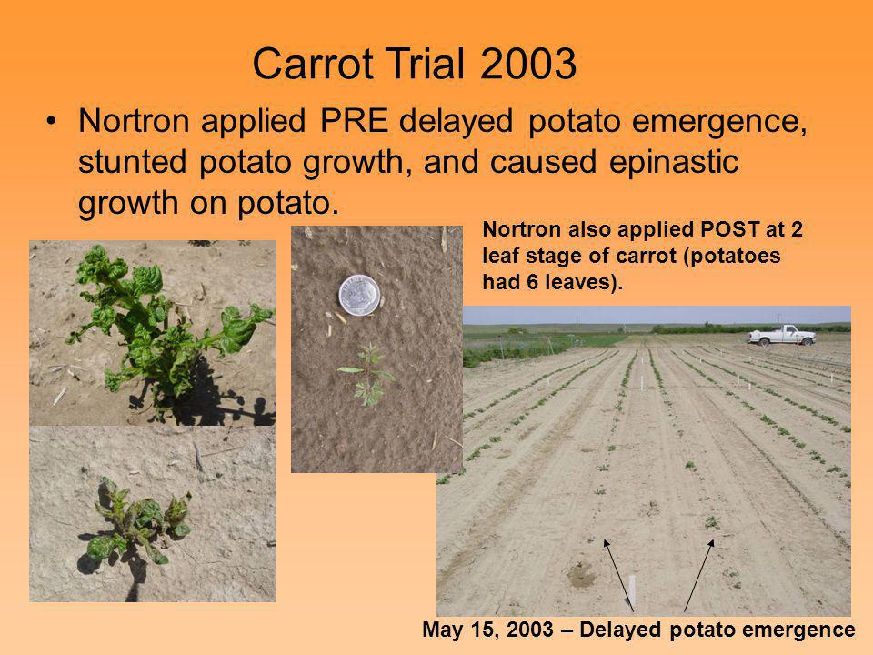 Nortron applied PRE delayed potato emergence, stunted potato growth, and caused epinastic growth on potato. May 15, 2003 – Delayed potato emergence Ca